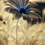 Zehn Jahre Fotografie - Meine fotografische Geschichte