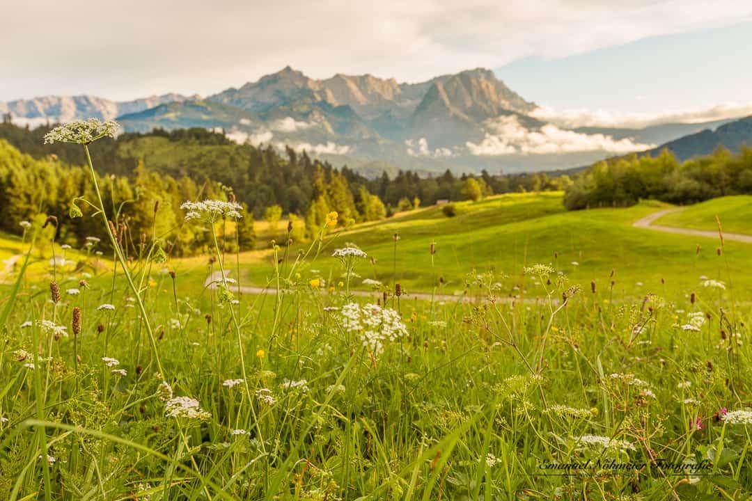 Berge mit Sommerwiese