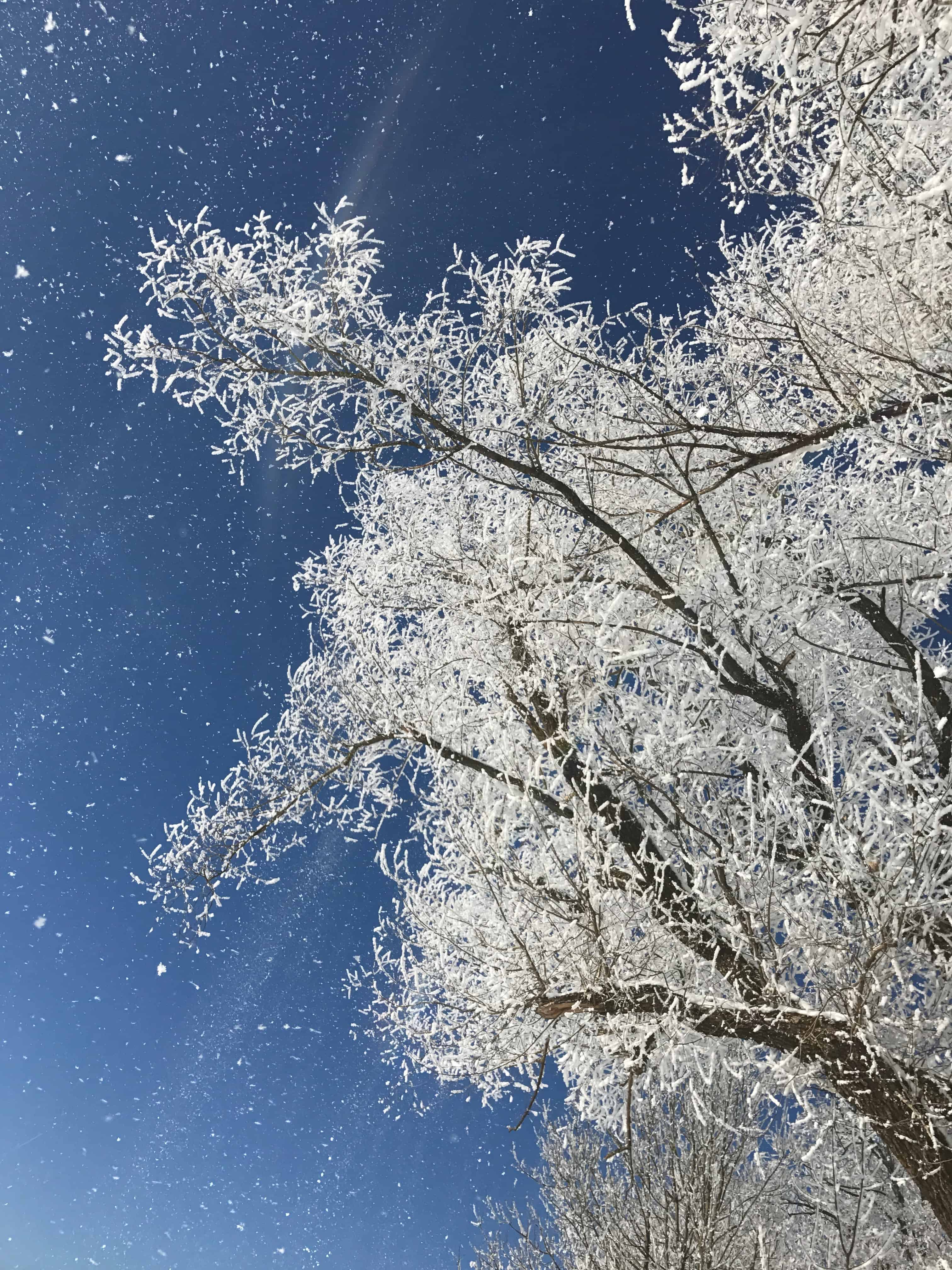 Winterzauber in seiner vielfältigen Art und Mystik